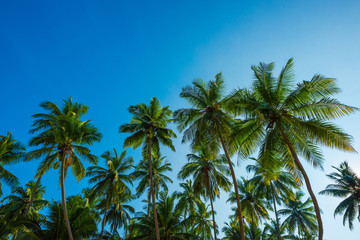 Tropical coconut palm trees at sunny summer day with blue sky background