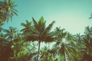 Tropical exotic coconut palm trees retro color stylized