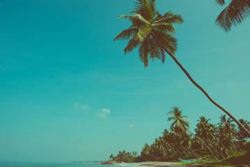 Tropical beach with exotic coconut palm trees vintage color stylized