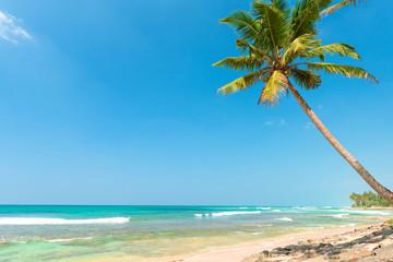 Palm tree on tropical ocean beach