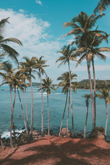Palm trees on hill at tropical beach, vintage toned and retro color stylized