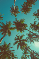 Vintage toned different tropical palm trees at summer tropical island beach, view from bottom up to the sky with sun and rays