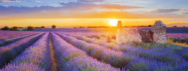 Photo sur Plexiglas Miel purple lavender filed in Valensole at sunset