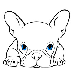 dog vector breed cute pet animal bulldog