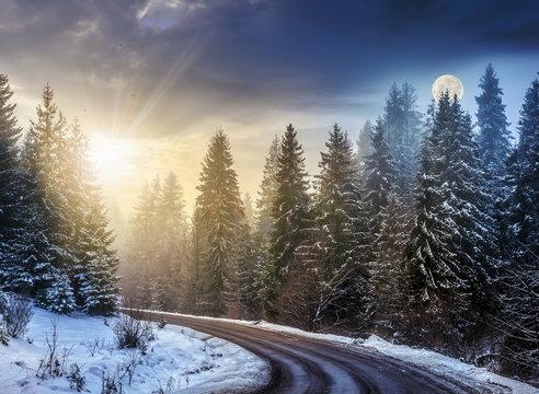 snowy road through spruce forest