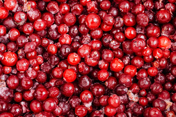 Closeup of red  frozen  ripe Lingonberry