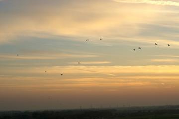 Vögel am Abendhimmel
