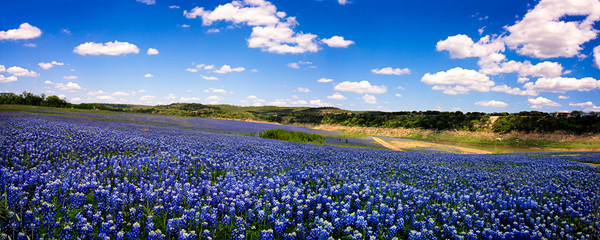 Fotobehang Texas Field of Blue Panorama