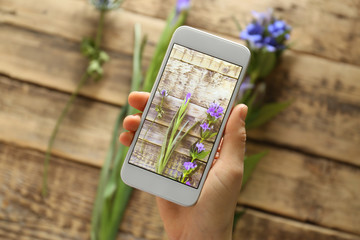 Female hand taking photo of beautiful flowers with smartphone