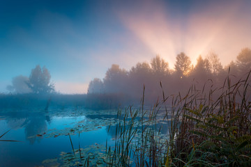 Sun Rays through the fog over high reeds at lake coast. Ukraine. Wall mural