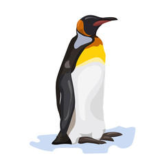 black and white cartoon penguin at the white background