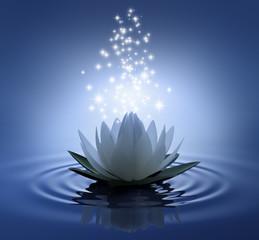Lotusblüte auf blauem Wasser mit Sternen