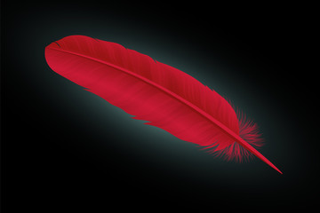 Red feather on a black background. Vector