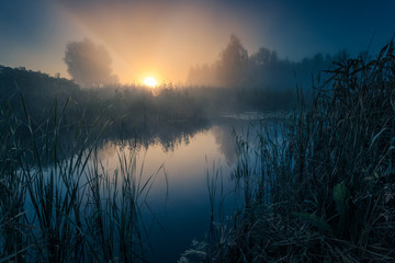 Sun is rising over foggy lake coast with reeds. Wall mural