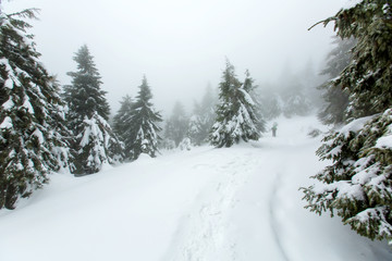 Mystical winter forest covered with snow on winter day