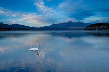 日の出を待つ富士と山中湖の白鳥