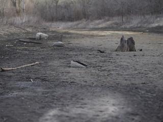Dry streambed