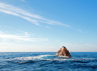 "Sea Lion resting on ""the Point"" or ""Pinnacle of Lands End"" of Los Arcos in Cabo San Lucas in Baja MEX B C S"