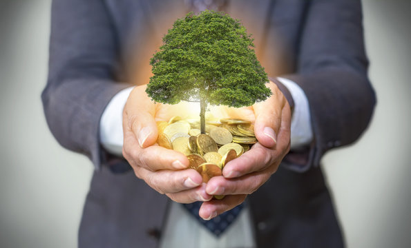 Hands holding a tree growing on coins / csr green business / business ethics / good governance