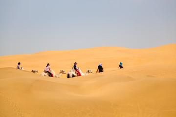 camels caravan in desert