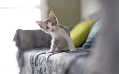 serious cat