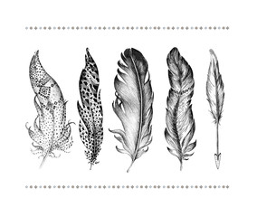 Set of hand drawn bird feathers isolated on white background. Bo