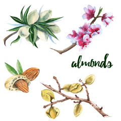 The set of branches of almonds. Isolated on a white background. Watercolor illustration.