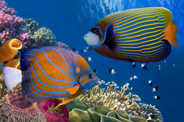 Fototapete - Colorful coral reef with many fishes