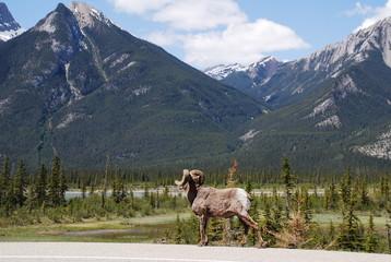 Jasper National Park, Kanada