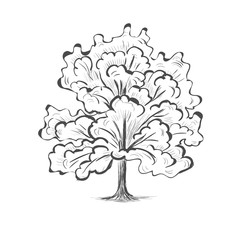 Oak tree sketch tree silhouette illustration picture vector