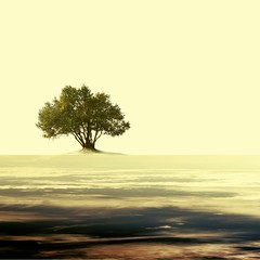 Vintage empty landscape with single olive tree.