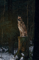 dog sits in the wood on a stub