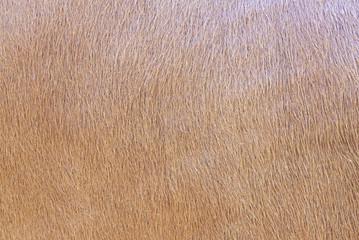 brown textured cowhide
