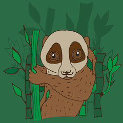 Lori animal drawn by hand with ink on a green background with bamboo