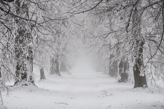 Snowy fairytale winter time with alley of trees, Czech Republic