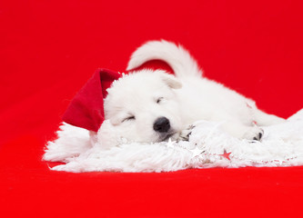 puppy in a Christmas hat