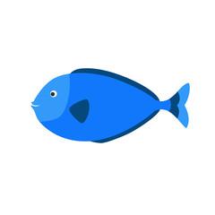 blue aquarium exotic fish tropical