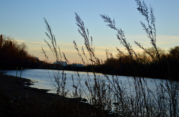 Plant silhouette with river at sunset
