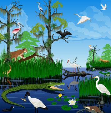 vector wetland Pantanal Florida Everglades landscape with animals