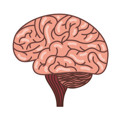 human brain organ isolated icon vector illustration design