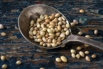 Whole coriander seeds on an antique spoon