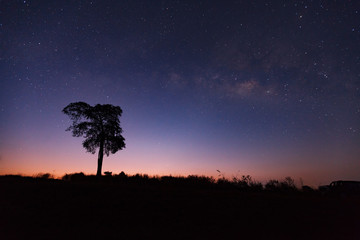 Beautiful milky way and silhouette of tree on a night sky before