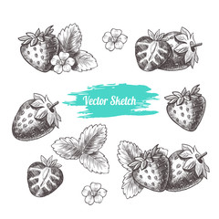 Vector strawberry hand drawn sketch. Sketch vector  food illustration. Vintage style