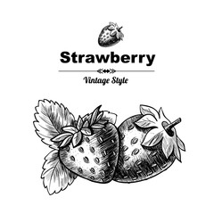 Vector background with  strawberry. Hand drawn. Vintage style