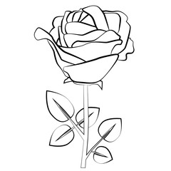 Rose flower. Silhouette. Black contour on white background. For your design.
