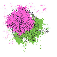 Beautiful pink flower isolated on white background. For your design.