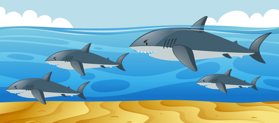 Ocean scene with sharks swimming in the sea