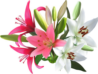 pink and white isolated bunch of lily flowers