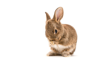 Isolated Image of a brown baby rabbit Wall mural
