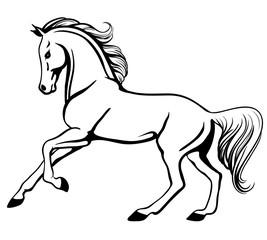 Outline Of Horse Sasolo Annafora Co